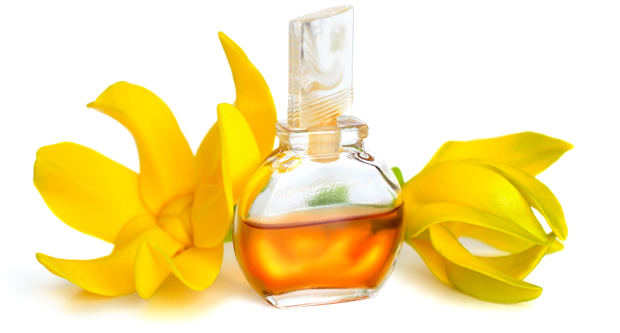 イランイラン花油の香り